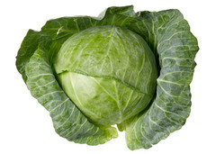 cabbage_medium